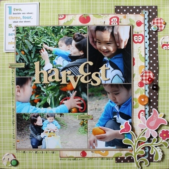 41_harvest2y8m