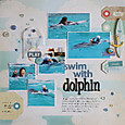 swim with dolphin